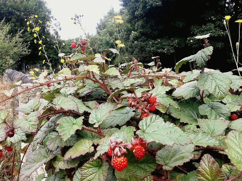 Autumn Autumn Colors Blackberryphoto Celandinepoppy Mothernature Redberries Jam Wall Canal Sunshine