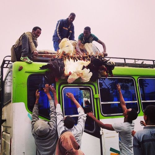 HappyEthiopianNewYear Ethiopiannewyear Enkutatash EnkutatashSpecial AyerTena JimmaBer AddisFlow AddisLiving Awdamet Doro LiveChicken Addis  Addisababa Ethiopia