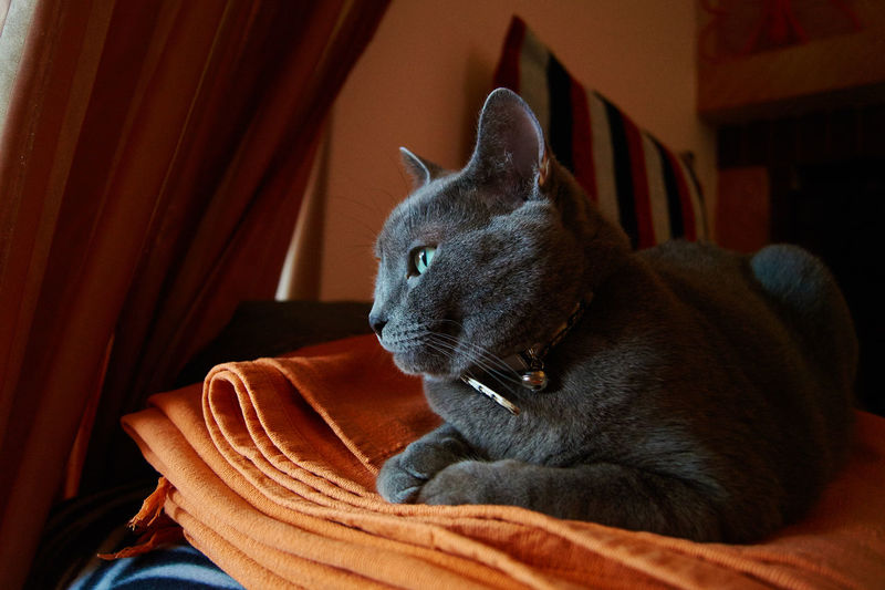 Cat Photography Cat Russian Blue Cats Of EyeEm Cat Lovers Hanging Out Relaxing