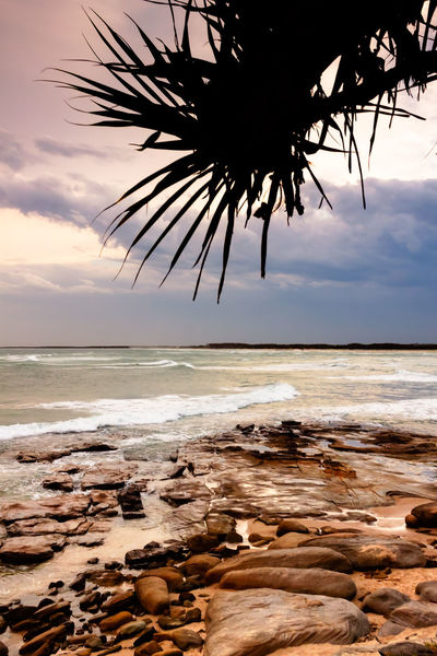 Sunset Behind The Leaves Australia Beach Caloundra Coastline Horizon Over Water Ocean Outdoors Palm Tree Queensland Sand Sea Seascape Shore Surf Tranquil Scene Tranquility Tropical Climate Vacations Water Wave
