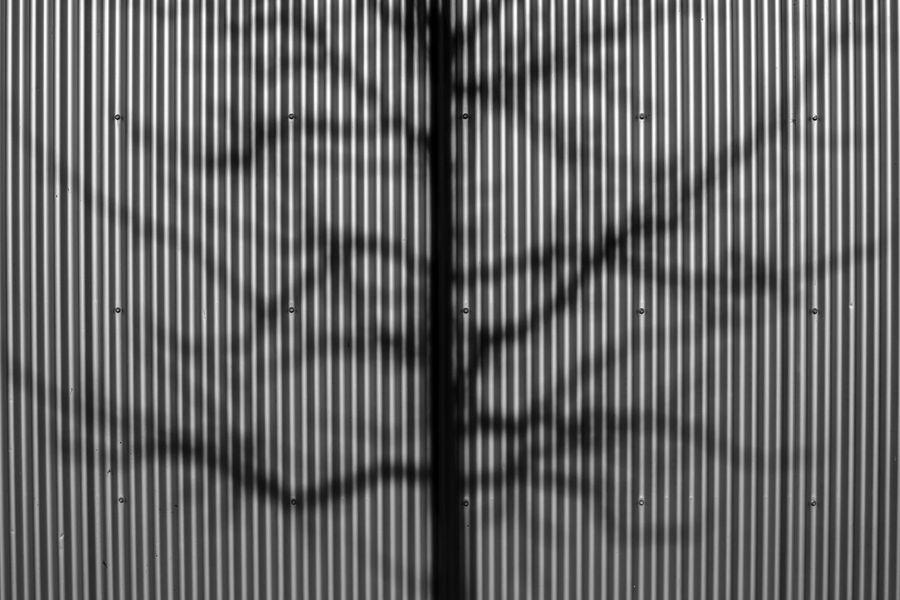 Backgrounds Bäume Corrugated Metal Day No People Schatten Schattenspiel  Shadow Shadowplay Textured  Wall Wanderlust Wellblech Winter Trees The City Light