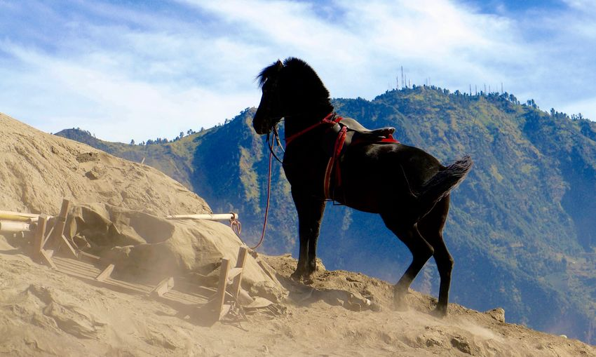 Black horse standing on mountain