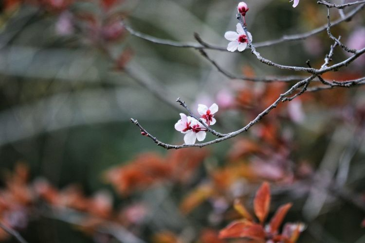 Flower Tree Branch Close-up Plant