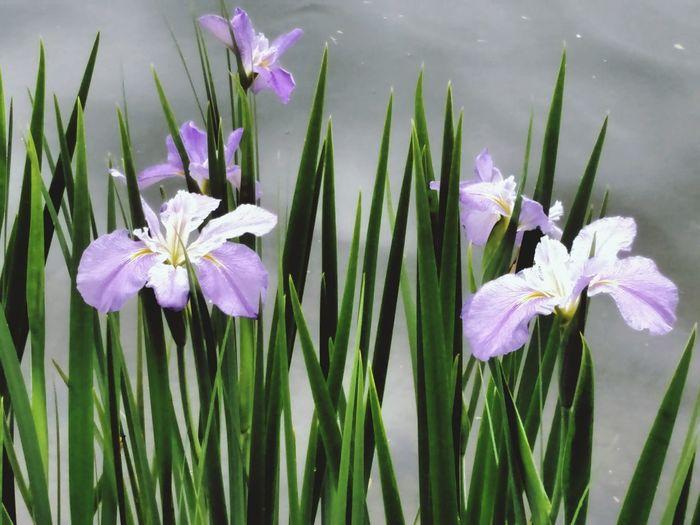 EyeEm Flower I Love Taking Pictures <3 EyeEm Nature Lover Flowerporn Loving Life! EyeEm Best Shots EyeEm Gallery Water Flowers Flower Collection Flowerpower