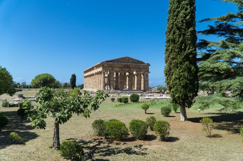Paestum Roman ruins, Italy Roman Ruins Temple Plant Architecture Built Structure Sky Nature Building Exterior Clear Sky Travel Destinations History The Past Tree Growth Blue Travel Day Sunlight Outdoors No People Green Color Building