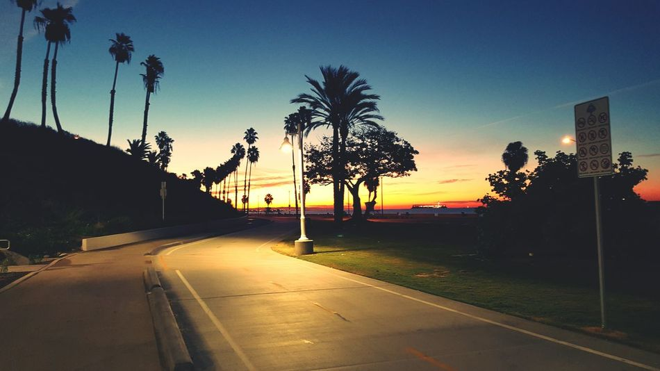 Beach Beach Photography Morning Sunrise Long Beach California Ocean Ocean View California Coast Lbchomegrown LBC Beautiful Palm Trees
