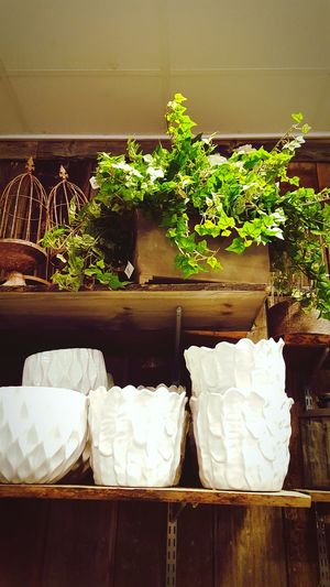 Enjoying Life Flowers Flower Flowershop Leafs Taking Photos Popular Photos Beautiful EyeEm Best Shots Wood Flowerpots