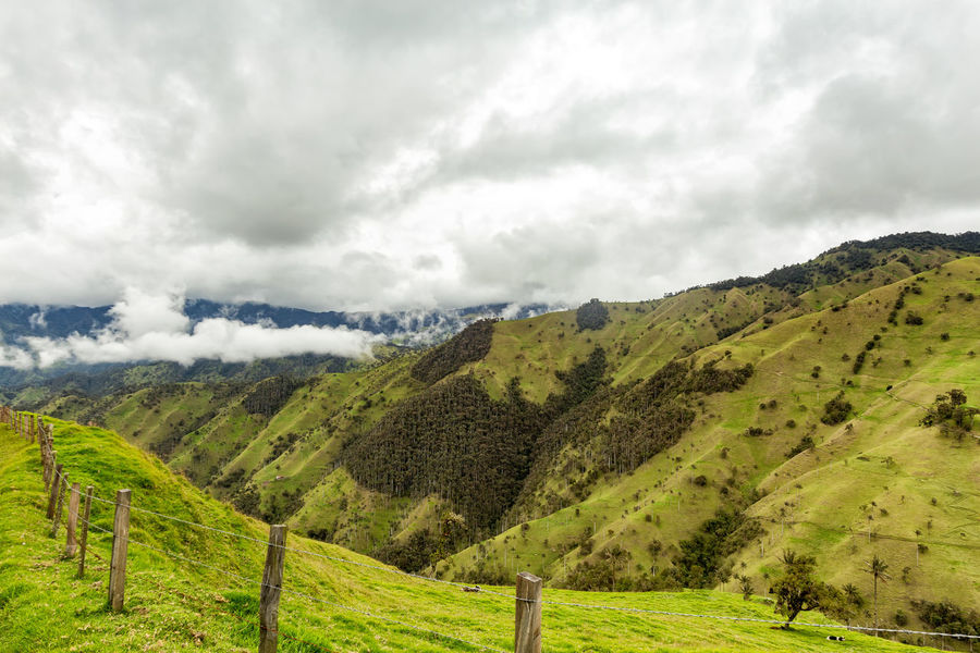 Fences disappear into the distance in the mountains outside of Salento, Colombia. Cloud Colombia Farm Hiking Palm Pasture Quindío Rural Tree Trip Andean Cauca Colombian  Countryside Fence Forest Hike Jeep Landscape Old Quindío Salento Tolima Trek Wax