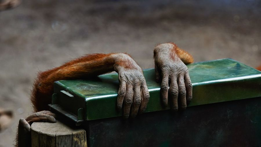 manicure Manicure! Monkey Hands Animals Animal Photography Two Is Better Than One