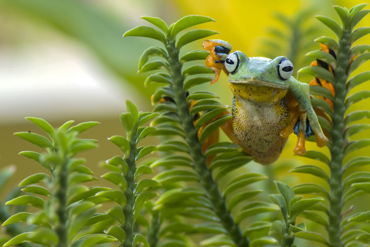 Close-up of frog on plants