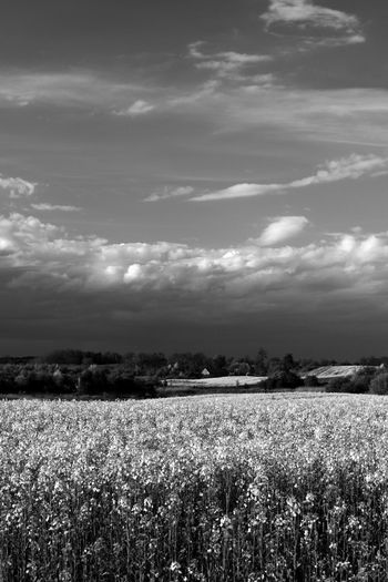 Agriculture Beauty In Nature Black And White Cloud - Sky Day Field Landscape Masuren Masuria Mazury Nature No People Outdoors Rural Scene Sky Spring Yellow