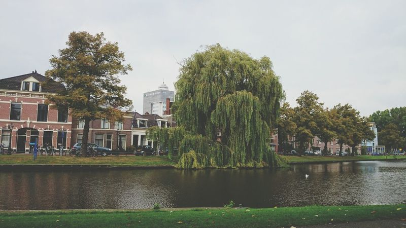 Probably one of the best spots in Leiden City Trees Photography Water