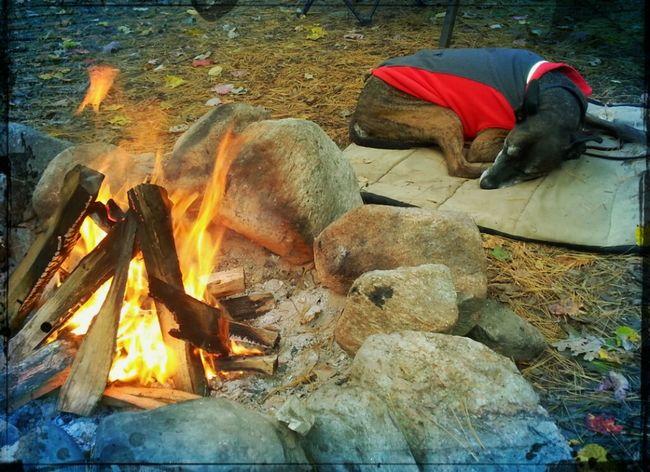 lazy camper Camp Fire Camping Best Friends ❤ Dog Love