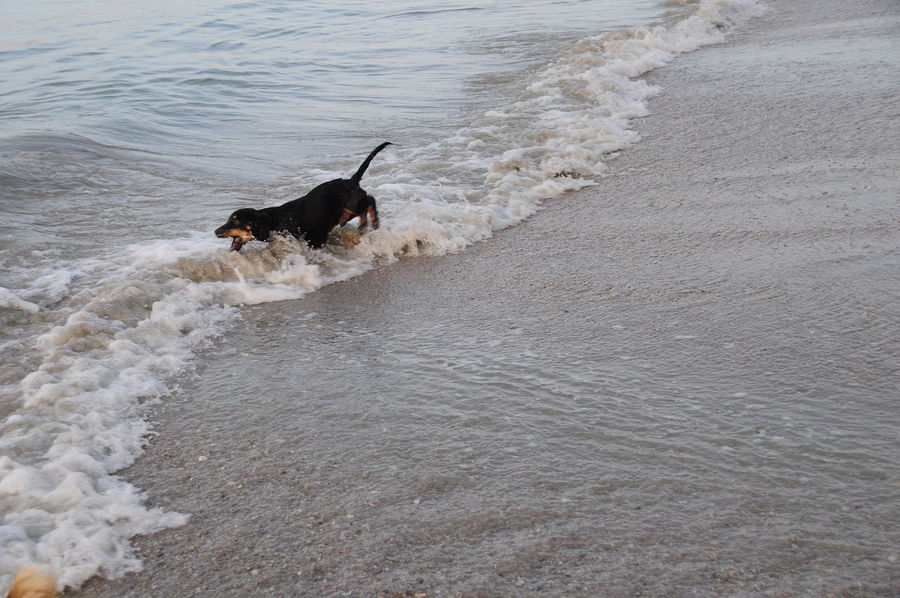 The sea at Rayong Thailand Beach Beach Life Dog On The Beach Dog Swimming Dogs Dogslife Sea Sea And Sky Sea View