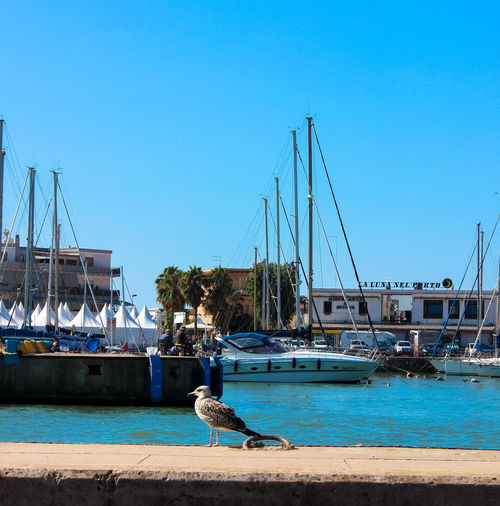 Blue Boat City Clear Sky Day Harbor Harbour Harbour View Harbourside Mast Mode Of Transport Nature Nautical Vessel No People Outdoors Sailboat Sky Tourism Travel Destinations Water Fiumicino Darsena Gabbiano Mare Fiume
