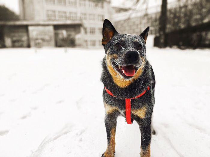 Portrait of dog on snow