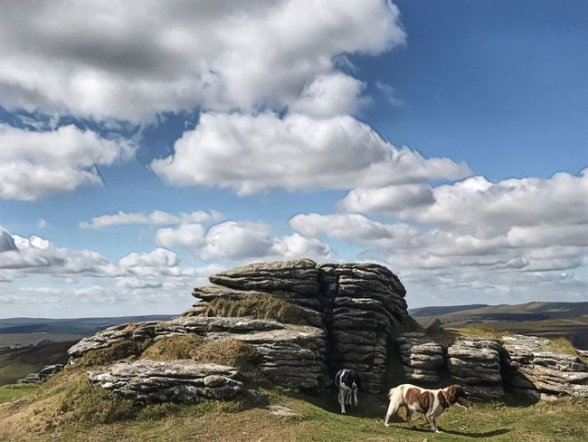 Dartmoor Dartmoor Mammal Domestic Animals Day Animal Themes Tranquility Tranquil Scene Beauty In Nature Animal Land Scenics - Nature No People