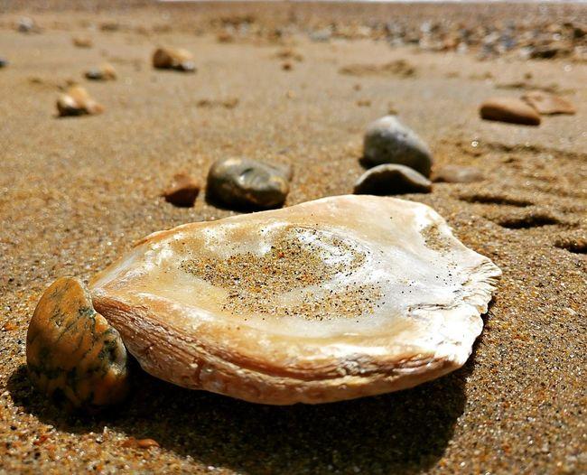 Seashell EyeEm
