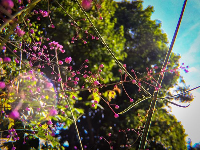 Lens Flare Focus On Foreground Tree Growth Nature No People Outdoors Day Beauty In Nature Branch Low Angle View Plant Fragility Flower Freshness Close-up Sky