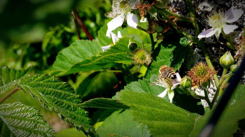 Facebook.com/photobyrich Photo By Rich Bee Maya The Bee Meh Worker Taking Photos Enjoying Life Garden Flower Photography Relaxing Pure