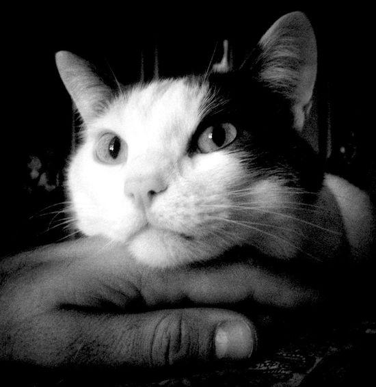 Friend Friendship Black & White Blackandwhite Monochrome Portrait Close-up Indoors  Animal Body Part Black Background Animal Mouth Animal Eye