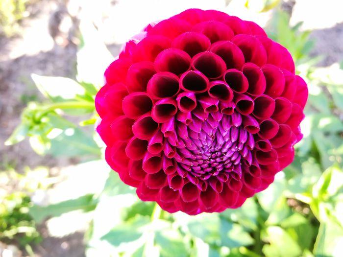 Flower No Filter, No Edit, Just Photography Home Sweet Home Garden Garden Flowers Color Palette