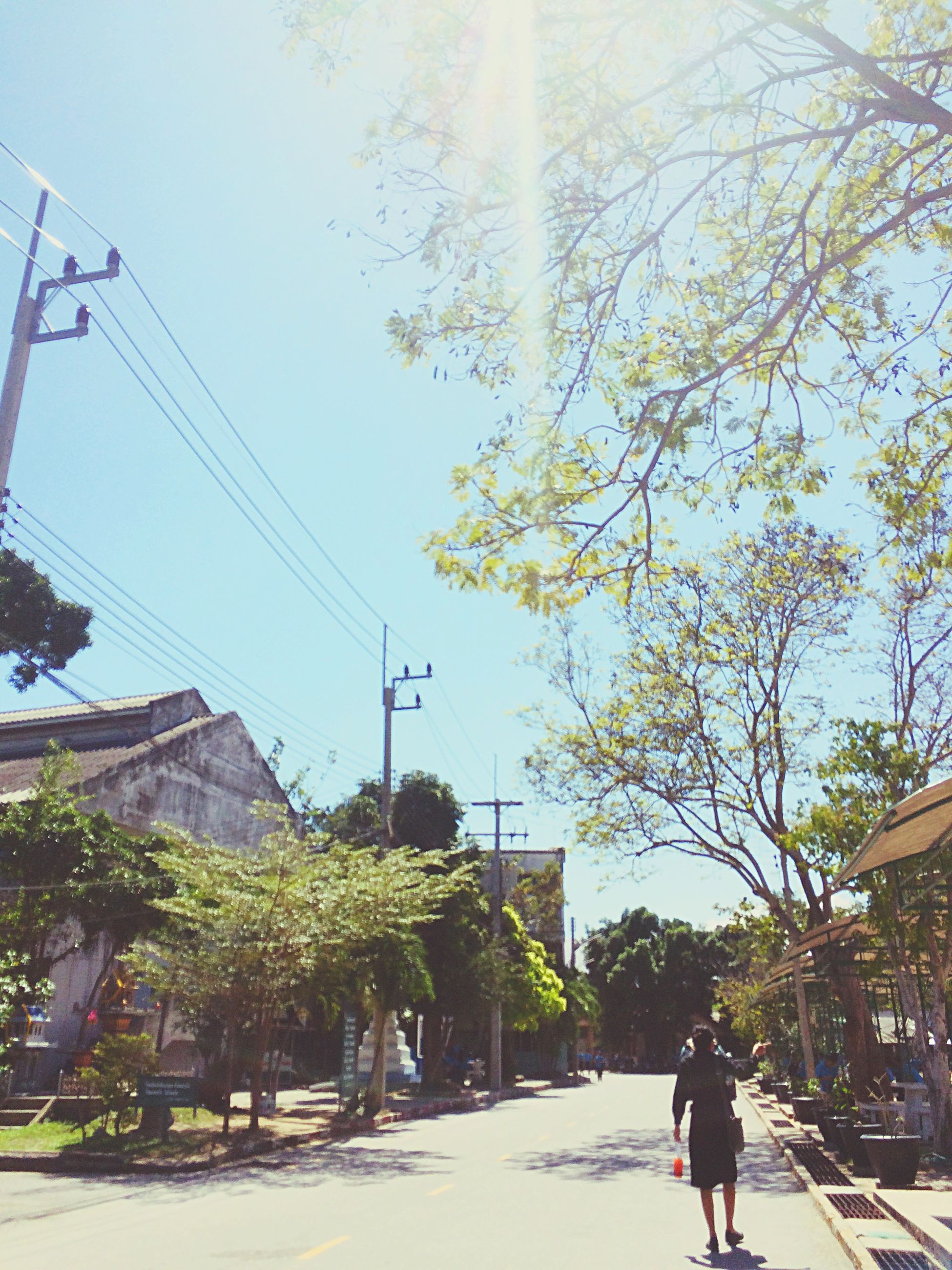 tree, outdoors, sky, day, city, architecture, one person, people
