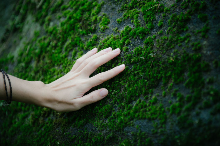 Cropped hand touching moss