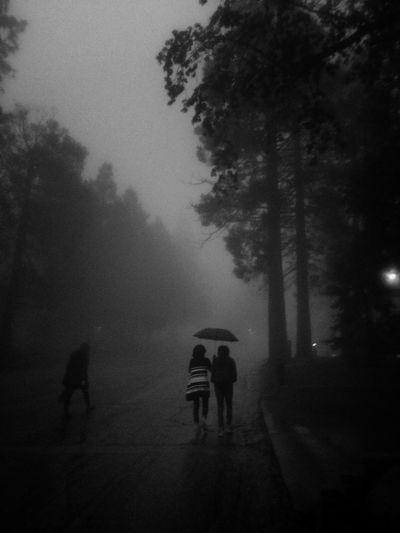 Black & White California idyllwild