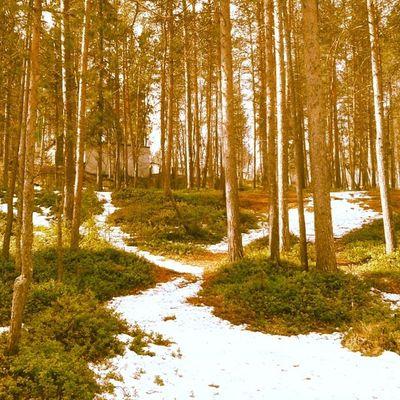 Forest Winter Beautiful Landscape EyeEm Best Shots - Landscape Trees Love ♥ Like EyeEm Gallery Nature EyeEm Best Shots Spring Beautiful Interesting Eyeemphotography