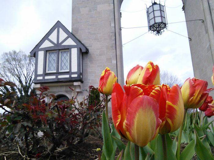 Showcase April Tulips In The Springtime Tulips Time Archetecture Posh Posh Posh...