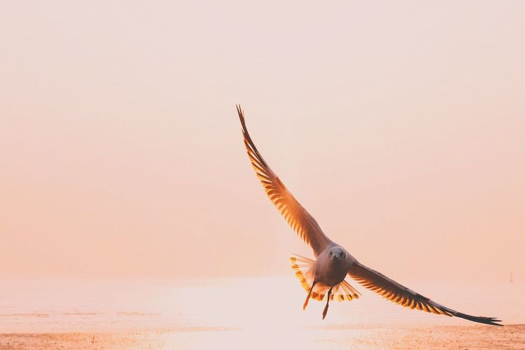 Flying One Animal Bird Spread Wings Animal Wildlife Animals In The Wild Animal Themes Sunset Nature No People Outdoors Kingfisher Day First Eyeem Photo