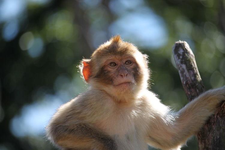 Portrait of monkey looking away