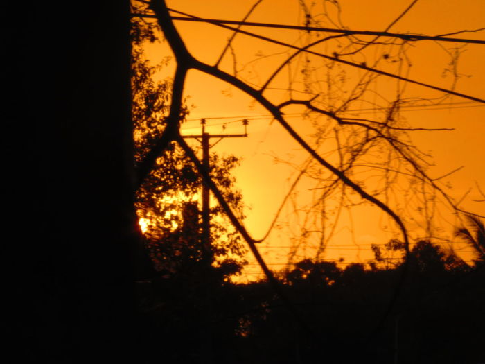 Bare Tree Beauty In Nature Black And Yellow  Branch Day Electricity Pylon Light And Shadow Light Sun Nature No People Outdoors Silhouette Sky Sunset Tranquil Scene Tranquility Tree Yellow And Black