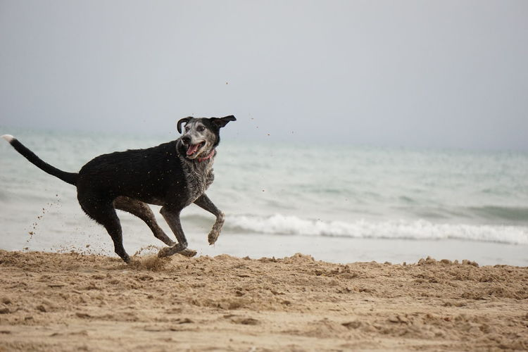 Animal Themes Beach Cloud Cloudy Cloudy Day Day Dog Domestic Animals Fetch Nature No People One Animal Outdoors Pets Playing Playing With The Animals Running Late Sand Sea Sky Wave