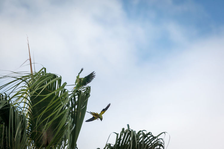 Low angle view of a bird flying against sky