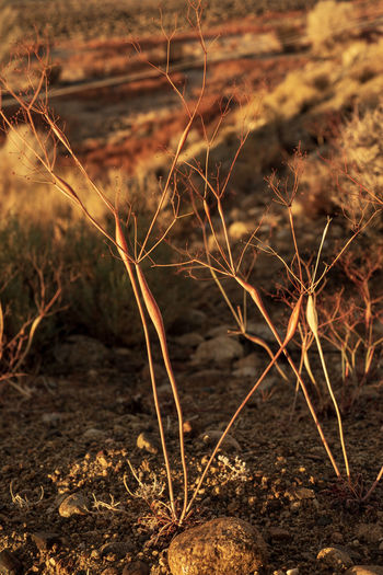 Nature Plant No People Land Day Dry Outdoors Close-up Focus On Foreground Field Selective Focus Growth Desert Beauty Desert Plants Golden Hour Nature Collection Sunrise_Collection Morning Light