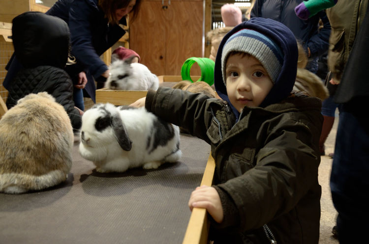 A young boy stroking rabbits at a petting zoo. Animal Animals Bored Child Childhood Cute Domestic Animals Fluffy Indoors  Pets Petting Zoo Rabbit Rabbits Strokes Stroking Young Boy