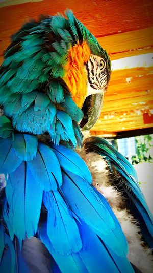 One Animal Multi Colored Animal Zoology No People Day First Eyeem Photo Bird Parrot Parrot Bird Taking Photos