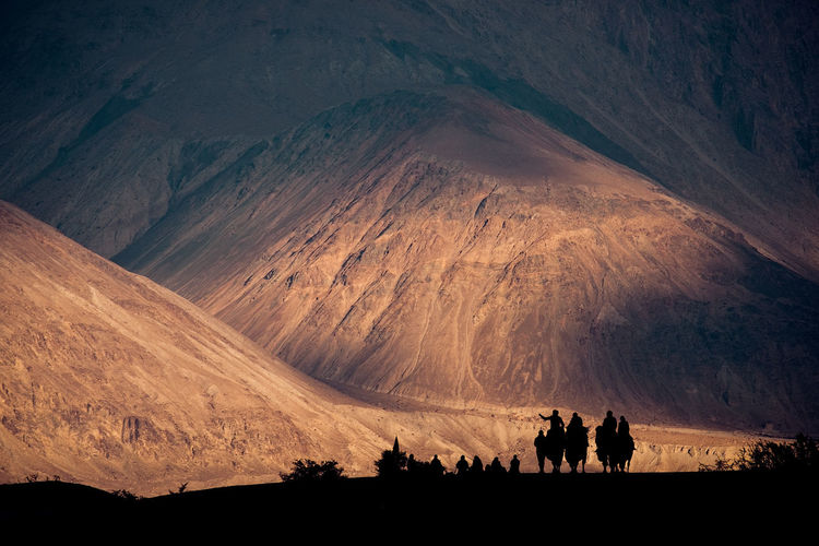 Silhouette image of camels caravan in the Hunder desert , Nubra valley ,India Jammu Leh Hunder Ladakh Nubra Hot Landscape Animal Journey Camel Heat Nature Silhouette Background Beautiful Extreme Tourism Desert Transportation Kashmir Sunset Mountain Group Indian Tourist ASIA Village Black Sun People Summer Scenery Valley Culture Dune Sand Hump View Travel Ride North Caravan Natural Adventure India Outdoor