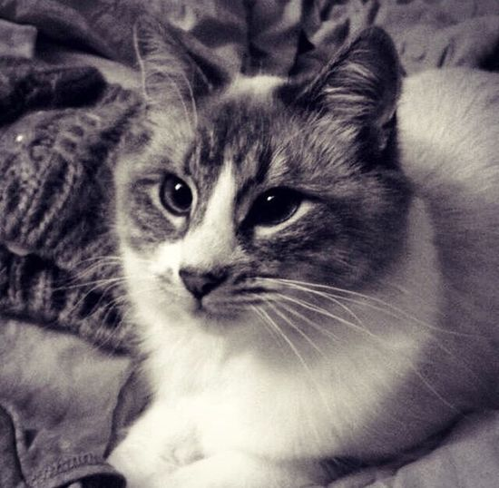 Handsome cat. Pets Domestic Cat Feline Close-up Domestic Animals Handsome Indoors  EyeEmNewHere Cat Eyes Cat Lovers