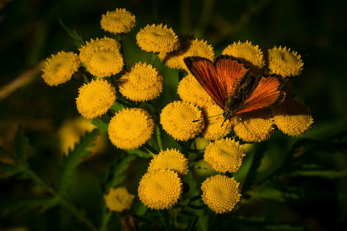 Sunlight Beauty In Nature Beauty In Nature Blooming Buetiful Butterflies Butterflies And Flowers Butterfly Butterfly - Insect Butterfly Collection Flower Fragility Insect Nature Orange Color Orange Insect Plant Yellow