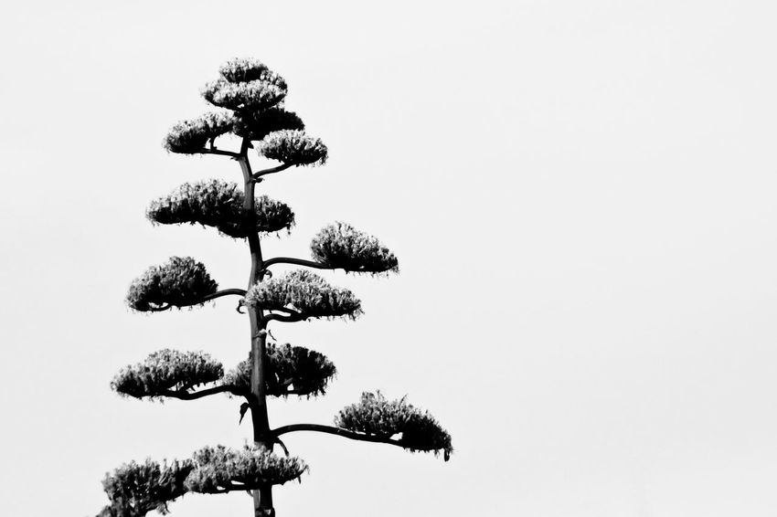 Zenview. Beauty In Nature Calm And Peace Calmness Growth Natural Nature No People Outdoors Peace And Quiet Peace And Tranquility Silhouette Tree Zen Zen Garden Zen Moment  Zen Tree