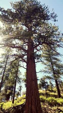 Mount Charleston Nature Nature_collection EyeEm Nature Lover Nature Photography Tree_captures