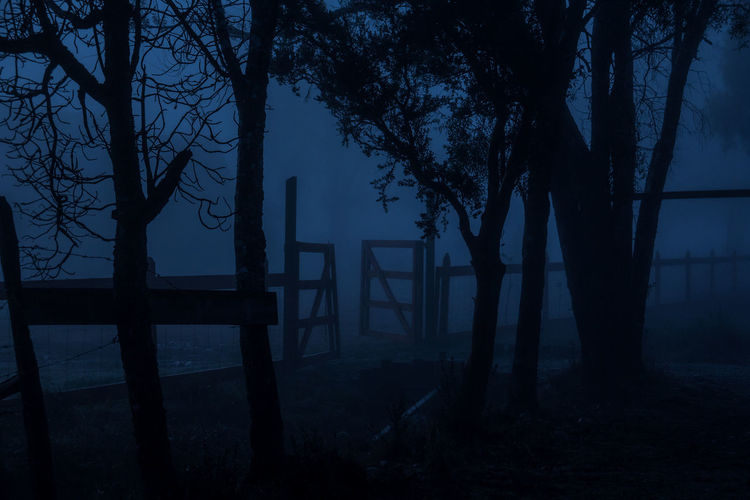 the entrance Amazing Beauty In Nature Blue Branch Cold Days Cold Temperature Day Dramatic Sky Fog In The Trees Fog Machine Foggy Morning In A Row Mystery Nature No People Non-urban Scene Outdoors Remote Silhouette Sky Solitude Tourism Tranquil Scene Tranquility Tree