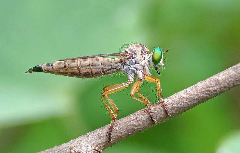 Close-up of dragonfly perching on leaf
