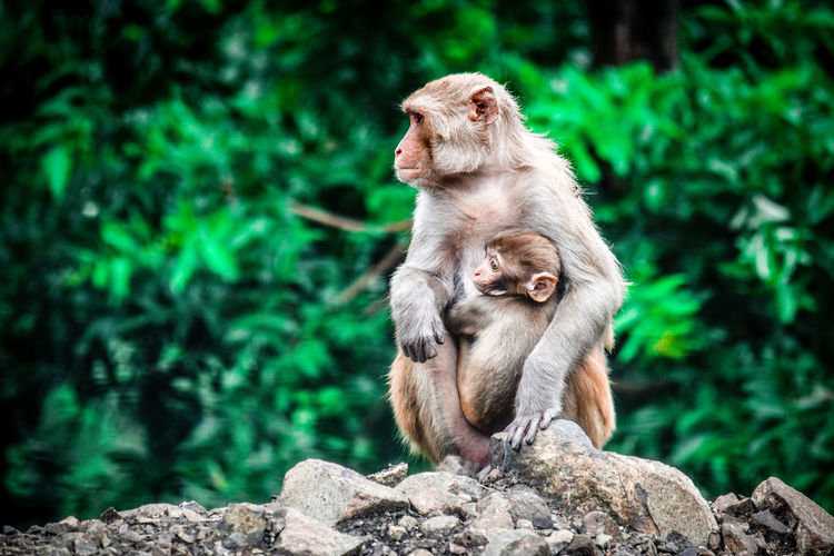 Wildlife Animal Themes Animal Wildlife Animals In The Wild Baboon Baby Care Child Close-up Day Focus On Foreground Lifestyles Mammal Monkey Mother Mountain Nature Nature No People One Animal Outdoors Primate Rock Sitting Tree Wildlife The Great Outdoors - 2017 EyeEm Awards