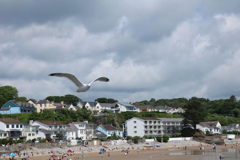 Nature beach life Wales Flying Cloud - Sky Architecture Bird Built Structure Building Exterior Building