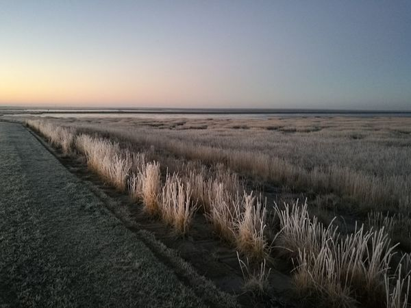 Watt Frozen Alone Silence Frozen Beach Scenics Travel Destinations Day No People Horizon Over Water Marram Grass Beach Sunset Tranquility Outdoors Grass Tranquil Scene Beauty In Nature Growth Sky Nature Sea Landscape Clear Sky Water