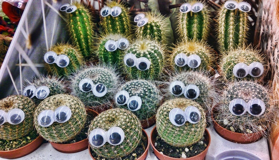 High angle view of artificial eyes on barrel cactus